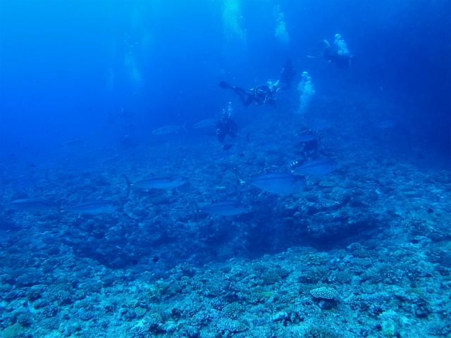 沖縄 粟国 粟国島 筆ん崎 ドリフト 自社船 ダイビング ボートダイビング