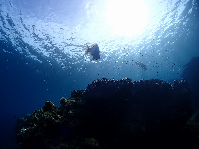 沖縄 体験ダイビング タマン