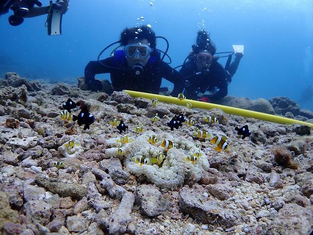 沖縄 体験ダイビング クマノミ家族