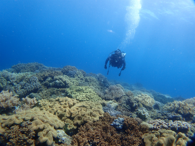 沖縄 砂辺 北谷 宮城海岸 ダイビング ビーチダイビング