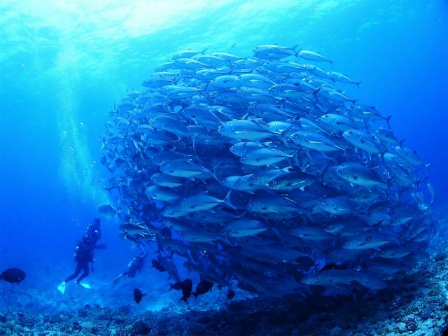 沖縄 粟国 筆ん崎 ドリフト ダイビング ファンダイビング 自社船 沖縄本島