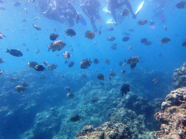 沖縄 真栄田岬 青の洞窟 ダイビング 体験ダイビング ビーチダイビング