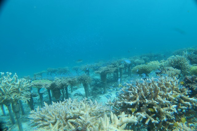 沖縄 ダイビング 本島近海 ボートFUNダイビング