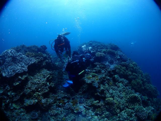 沖縄 砂辺 北谷 ダイビング ボートダイビング