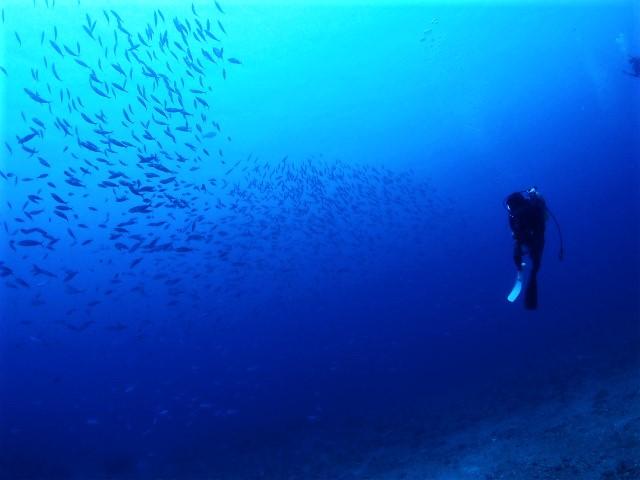 沖縄 慶良間 チービシ ドリフト ドリフトダイビング ダイビング ファンダイビング