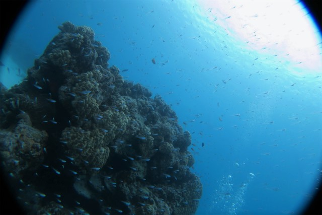沖縄 慶良間 慶良間諸島 ダイビング ボートダイビング