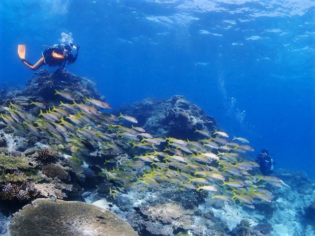 沖縄 チービシ チービシ諸島 ダイビング ファンダイビング ボートダイビング