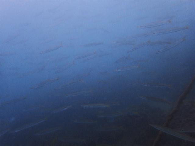 沖縄 那覇 ビーチダイビング ダイビング