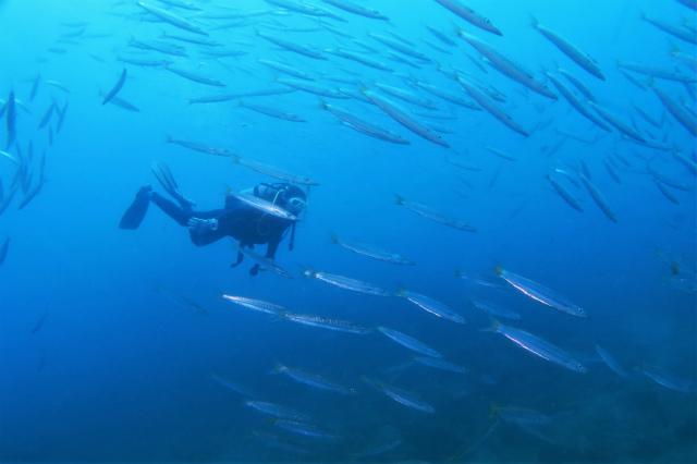 沖縄 沖縄本島 北谷 砂辺 宮城海岸 ダイビング ボートダイビング ファンダイビング 西海岸