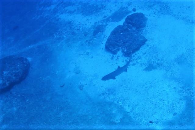 沖縄 ダイビング ファンダイビング ボートダイビング 沖縄本島 自社船