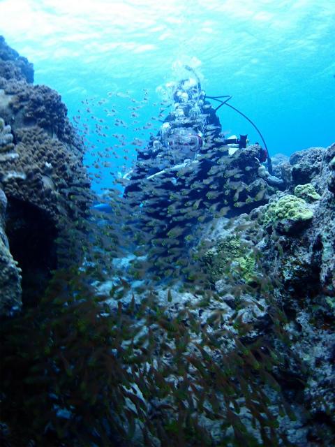 沖縄 沖縄本島 チービシ諸島 ナガンヌ島 神山島 ダイビング ボートダイビング