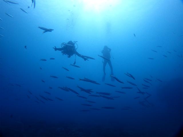 沖縄 沖縄本島 北谷 砂辺 宮城海岸 ダイビング ビーチダイビング