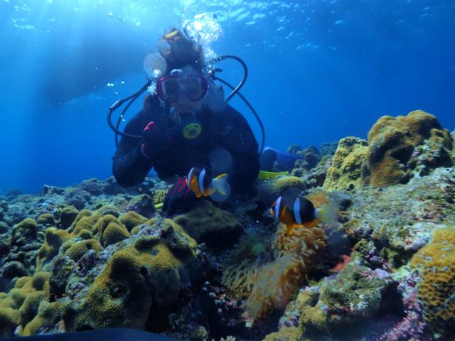 沖縄 ダイビング 慶良間 体験ダイビング ウミガメ
