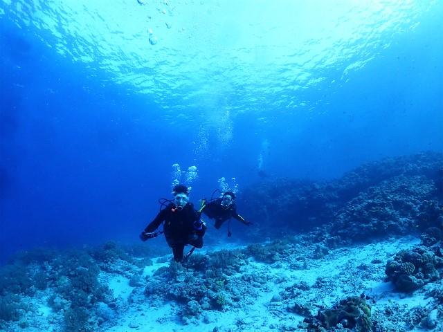 沖縄 慶良間 慶良間諸島 ダイビング ボートダイビング ファンダイビング