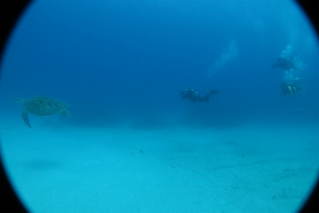 沖縄 ダイビング 近海ボートFUNダイビング