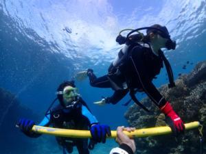 沖縄 体験ダイビング 北部ビーチ