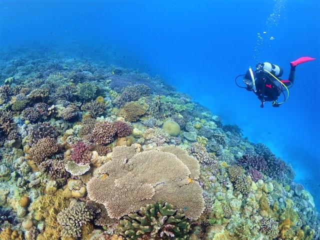 沖縄 ダイビング 北部 水納島 FUNダイビング
