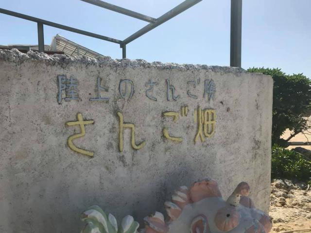 沖縄 読谷村 サンゴ サンゴ畑
