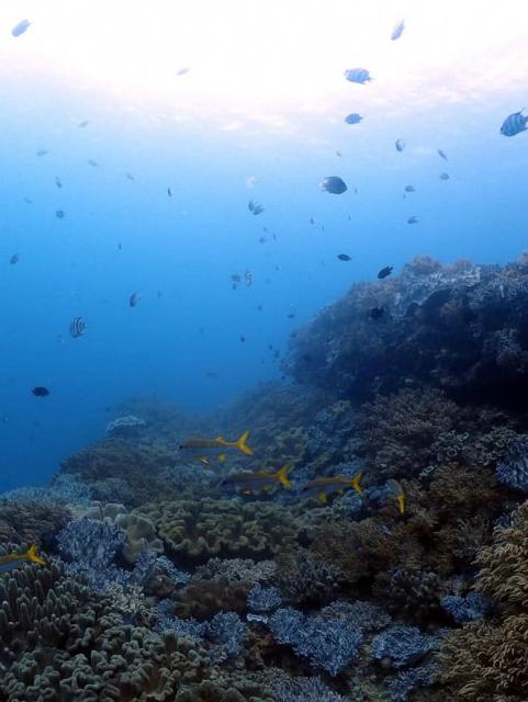 沖縄 北谷 砂辺 宮城海岸 ダイビング ボートダイビング 沖縄本島 ファンダイビング