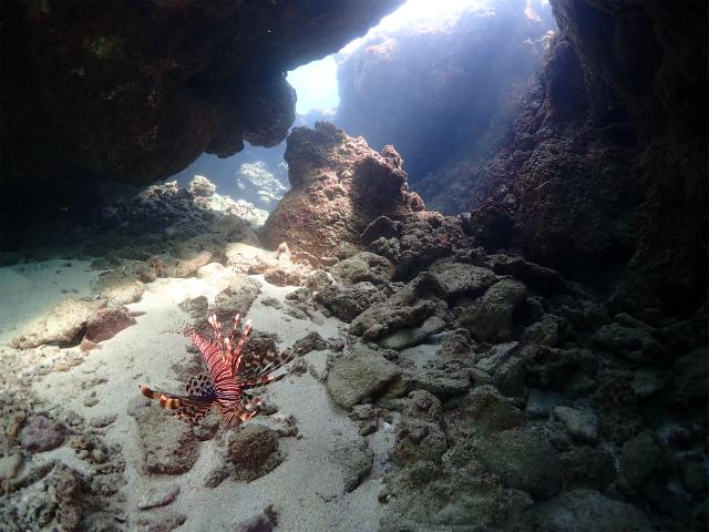 砂辺ダイビング 穴の出口