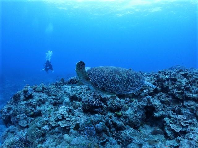 沖縄 チービシ諸島 神山島 ナガンヌ島 クエフ島 ダイビング ボートダイビング 自社船