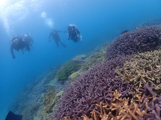 沖縄 ダイビング 本島近海 FUNダイビング