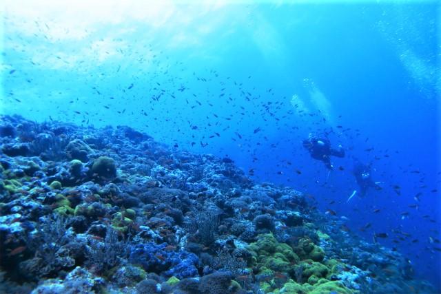 沖縄 渡名喜 遠征 ダイビング ドリフトダイビング ファンダイビング