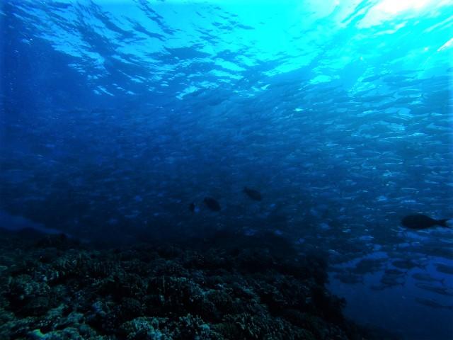 沖縄 粟国島 ダイビング 粟国 筆ん崎 ボートダイビング ファンダイビング ドリフトダイビング
