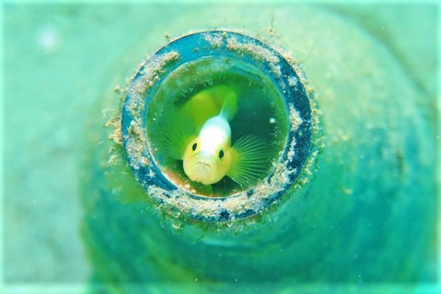 沖縄 沖縄本島 宜野湾 ボートダイビング ダイビング
