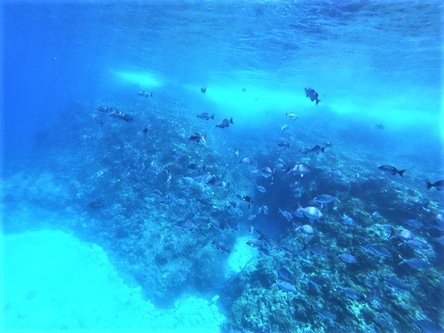 沖縄 慶良間 慶良間諸島 ダイビング 体験ダイビング