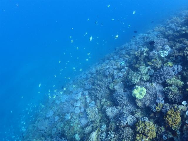 沖縄 ダイビング イナンビシ FUNダイビング