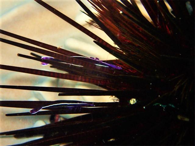 沖縄 沖縄本島 チービシ 砂辺 北谷 ダイビング ボートダイビング ファンダイビング 体験ダイビング 自社船