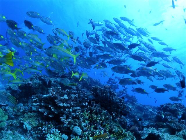 沖縄 ダイビング 慶良間 FUNダイビング 体験ダイビング OWD講習