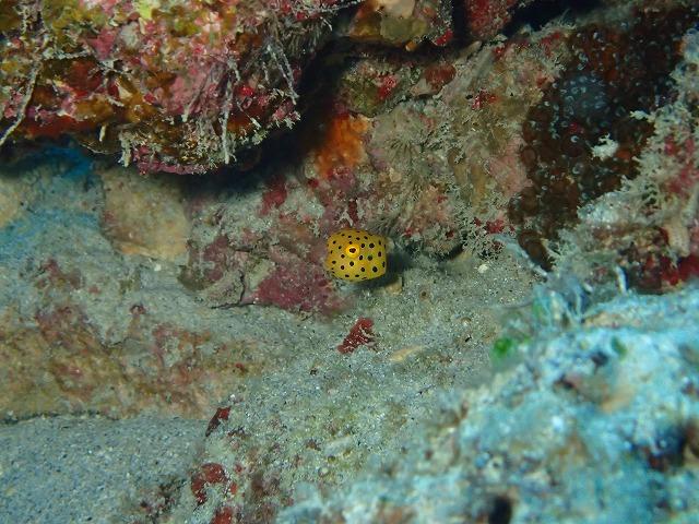 沖縄 ダイビング 東海岸ボートfunダイビング