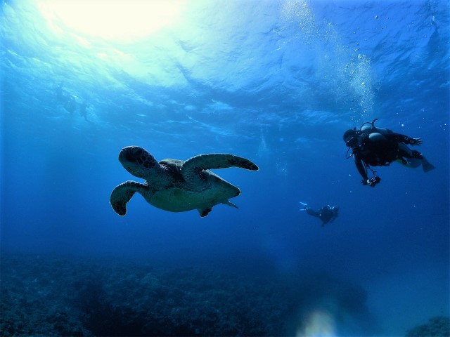 沖縄 ダイビング 慶良間 体験ダイビング FUNダイビング 慶良間諸島 ボートダイビング 自社船