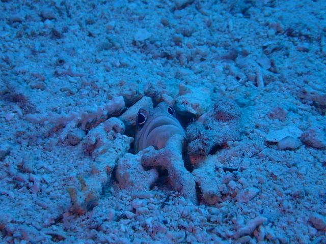 沖縄 慶良間 体験ダイビング FUNダイビング
