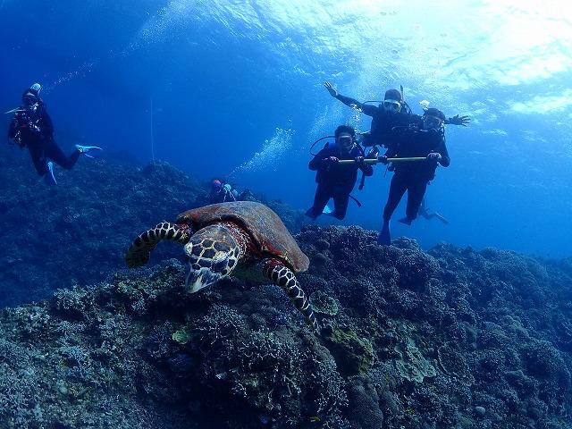 沖縄 慶良間 FUNダイビング 体験ダイビング ライセンス講習