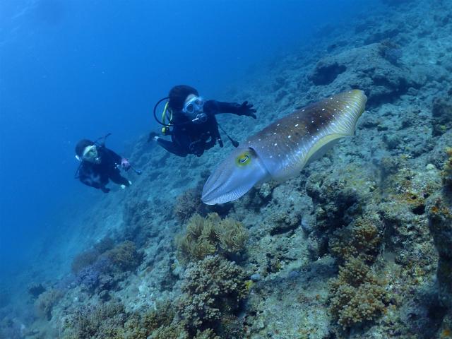 沖縄 ダイビング イナンビシ 体験ダイビング