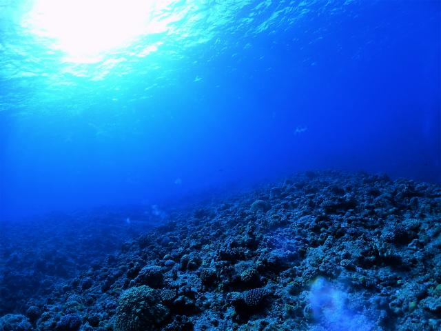 体験ダイビング 慶良間 ウミガメ