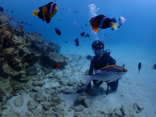 ダイビング 体験 沖縄 海