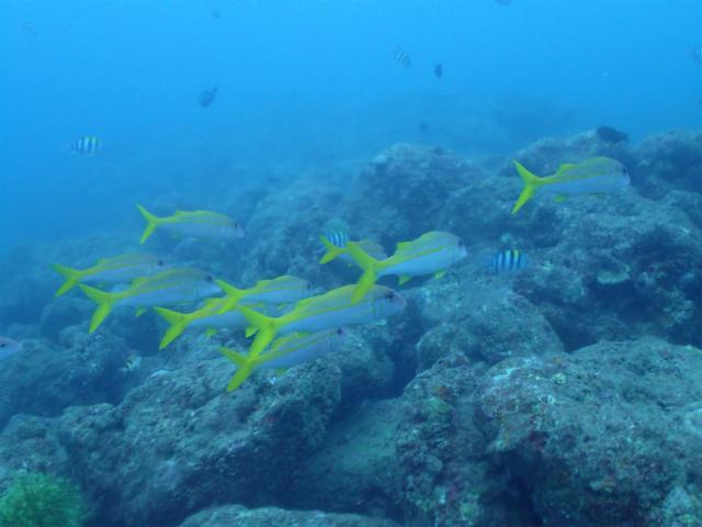 ダイビング FUN 海 沖縄