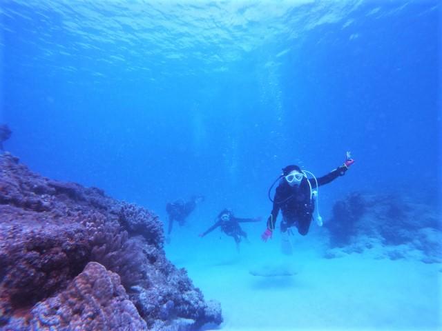 沖縄 沖縄本島 ダイビング 北部 ゴリラチョップ 崎本部 ビーチダイビング ファンダイビング