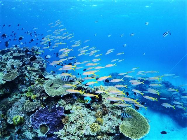 沖縄 ダイビング 慶良間 FUNダイビング 体験ダイビング チービシ諸島 自社船