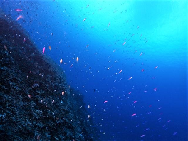 沖縄 ダイビング 慶良間 FUNダイビング 自社船 ボートダイビング