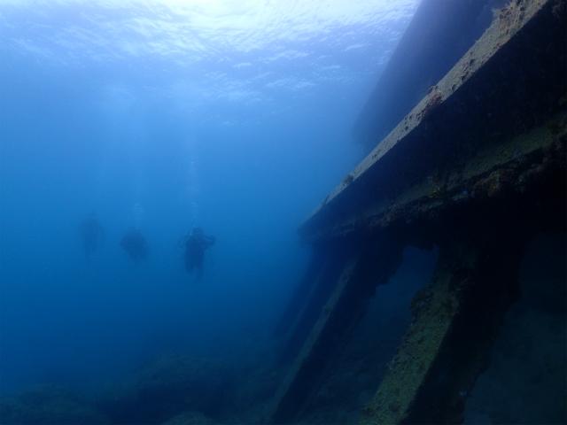 ウミウシ 海 沖縄