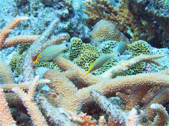 チービシ諸島でダイビング