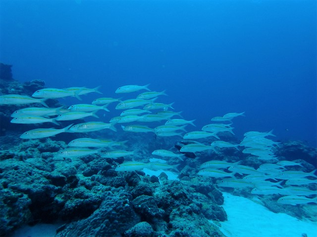 自社船で慶良間諸島ダイビング