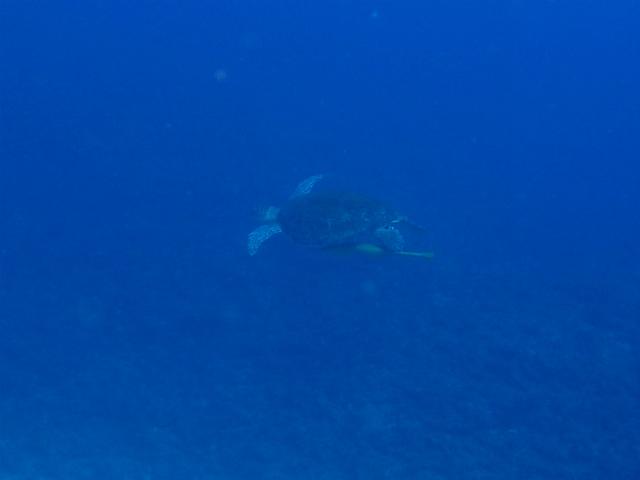 沖縄 前兼久 ダイビング