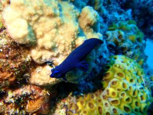 海 景色 魚