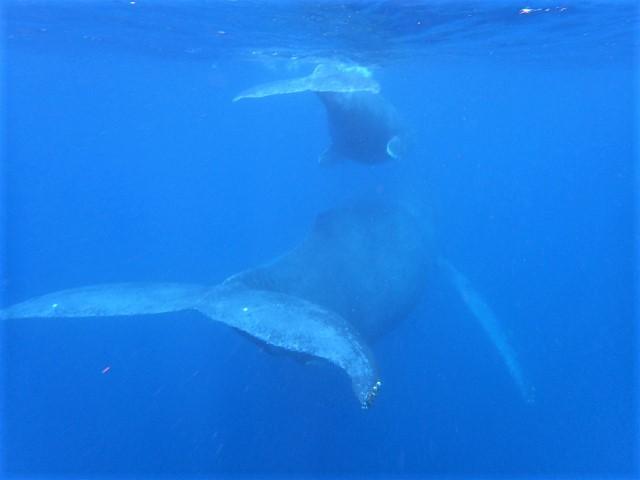 慶良間諸島でダイビング